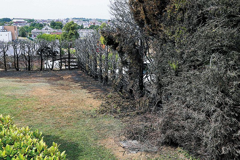 Laws Lane hedge fire was started deliberately